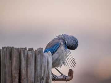 Scratching an old itch.. - blue and white bird on brown wooden fence during daytime. San Francisco, CA, USA