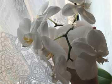 orchid - This image shows a camera flower