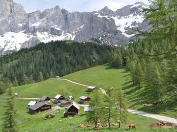Austria. Alpine village - Austria. Alpine village, forest, mountains