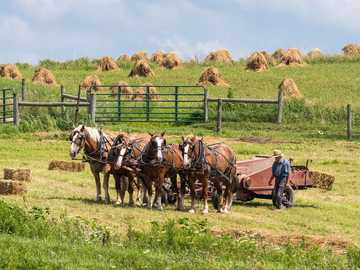 Balic Ohio back roads... - four horses pulling farm equipment.