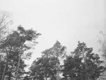 Numérisation de photos sur pellicule 120 mm - photographie à faible angle d'arbres par temps brumeux.