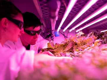 Engineers monitor crops in sustainable indoor farm - woman in pink long sleeve shirt wearing black sunglasses.