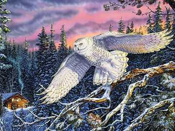Bird. Owl. - Jigsaw puzzle. Animals.