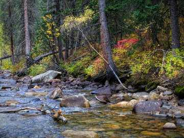 Saint Vrain River - river surrounded by trees. Colorado, USA