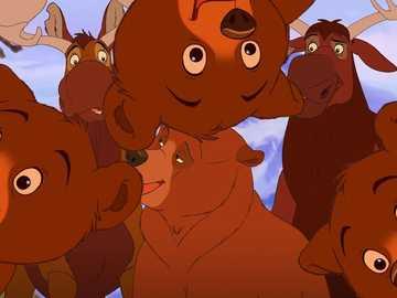 """Mein Bruder Bär - """"Raserei der Sinne hat mit Liebe zu tun, wie Traum mit Leben."""""""