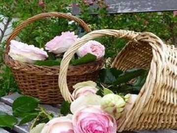 Kosz   z  różami . - Kosz i piękne róże .