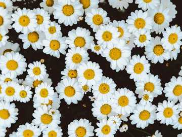 bed of daisies - Sometimes, I take walks around my city to look for pretty details. These flowers qualified. ?. Muurh