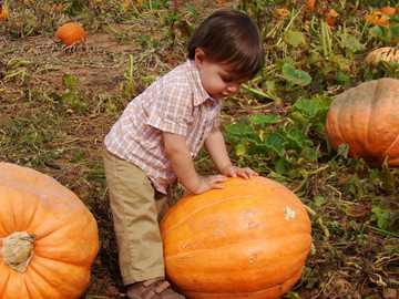 Kürbisernte - Kind trägt braune Hosen, die orange Kürbis halten.
