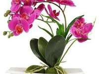 Orchidej. - Velmi krásná orchidej.