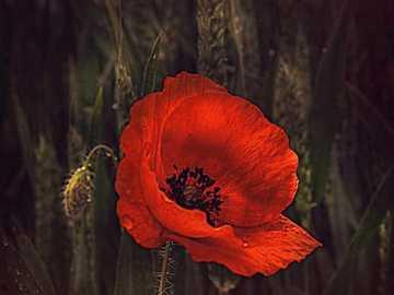 Miłość jest jak piękny kwiat - Miłość jest jak piękny kwiat