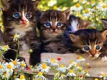 A cat trio with beautiful eyes is resting - A cat trio with beautiful eyes is resting among flowers