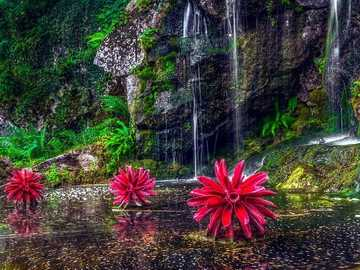 Water flowers. - Puzzle: water flowers.