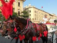 Cracovia. Libera a los caballos