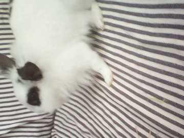 """Un coniglio nano che fa cose stupide - Il nostro coniglietto su un divano quando non dovrebbe essere lì! Versione """"Sono innocente&quo"""