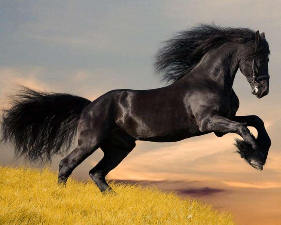 Útban az álomhoz - egy fekete ló és álmai (2×2)