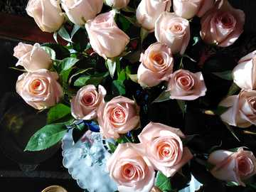 kwiaty - obraz ogolonych kwiatów