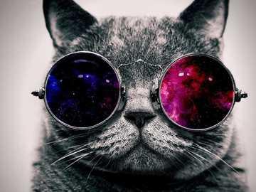 Bel gatto - Questo puzzle rappresenta quanto possono essere adorabili i gatti.