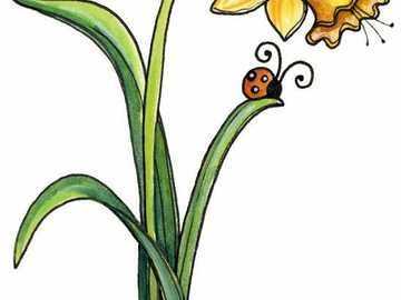 Kwiat żonkila - Ten obrazek przedstawia rysunek przedstawiający kwiat narcyza i 2 biedronki