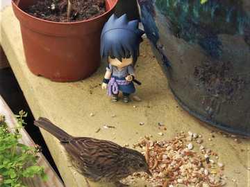 Sasuke bewundert einen Vogel - Sasuke füttert seinen Vogel