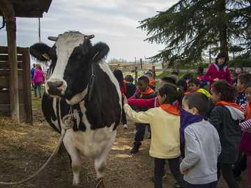 La granja - Es un rompecabeza sobre la visita a la granja.