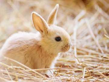 Conejo tierno - ¡Que hermosos son los conejitos bebes!