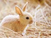 Mals konijn