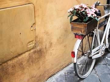 Bicycle with a flower box - white bicycle with potted flower beside yellow wall.