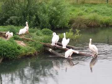 ptaki nad wodą - ptaki nad wodą w zoo