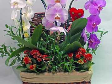 Blumenarrangement in einem Korb - Blumenarrangement in einem Korb