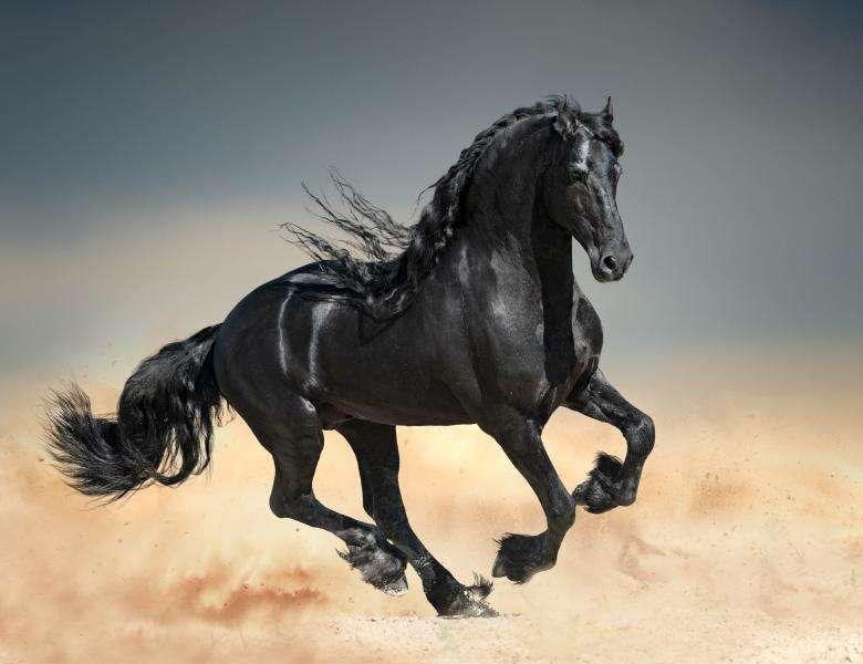 Zwart paard - на этой картинке представлены самые разные животные (2×2)