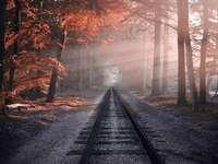 Vasúti sínek az erdőn
