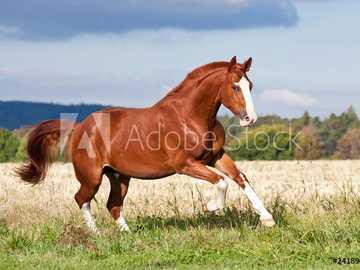 Cheval dans le pâturage - Un cheval au pâturage ...