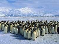 Penguins. - Penguins...............