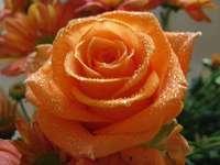 ೋ ღ Най-красивите цветя ೋ ღ