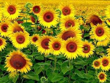 ೋ ღ Najpiękniejsze kwiaty ೋ ღ - ೋ ღ Najpiękniejsze kwiaty ೋ ღ