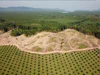 Abholzung - Abholzungsplantage für Palmöl