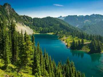 Świerki dookoła jeziora - Świerki dookoła jeziora