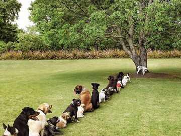 περιμένει στη σειρά - περιμένει στην ουρά για το μοναδικό δέντρο