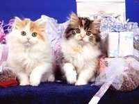 Gatos !!!