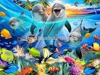 peixes no oceano - recife de coral