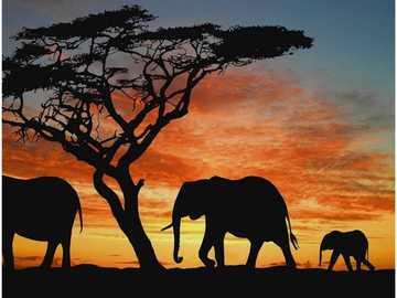 Sloní rodinka někde v poušti V noci - Sloní rodinka někde v poušti V noci