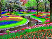flower garden in netherlands - flower garden in netherlands