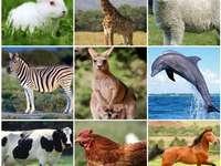 חיות Puzzle