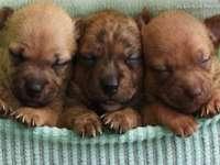 moje děti - tři malé mláďata