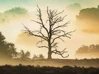 Il mio amico l'albero
