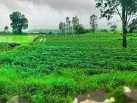 πεδίο πράσινο γρασίδι κάτω από συννεφιασμένο ουρανό κατά τη διάρκεια της ημέρας