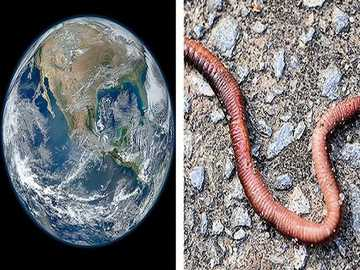 e is for earthworm - lmnopqrstuvwxyzlmnop