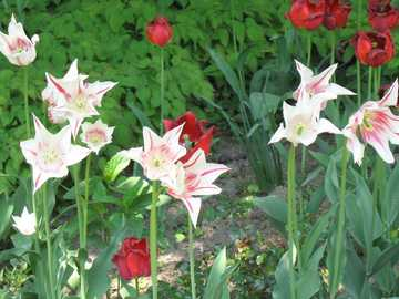 lit de ressort de tulipe - lit de ressort de tulipe