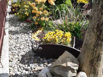 fleurs décoratives dans le jardin - fleurs décoratives dans le jardin