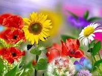summer flowers - summer flowers - the beauty of nature